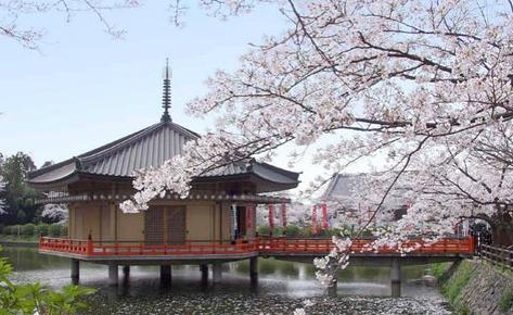 虽然是邮轮的常靠港之一,但是每次来都有不同的体验,福冈总是以最美的姿态来迎接你的到来。